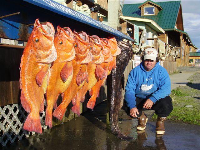 Alaska fishing charters for Halibut fishing homer alaska